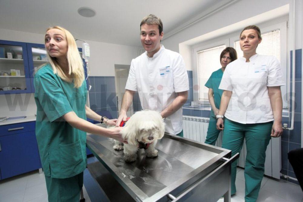 veterinarian oath