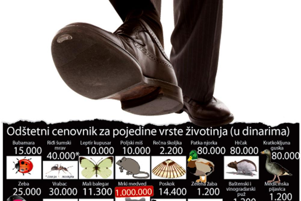 ubijanje, mrav, bubamara, miš, kazna, zatvor, Tatjana Babić, zaštita životne sre