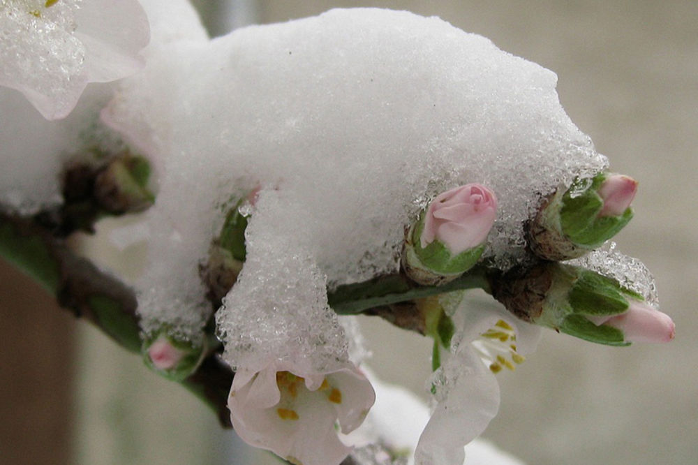 sneg, proleće, zima, severna zemljinoj polulopti, sneg, led, mraz, hladno vreme,