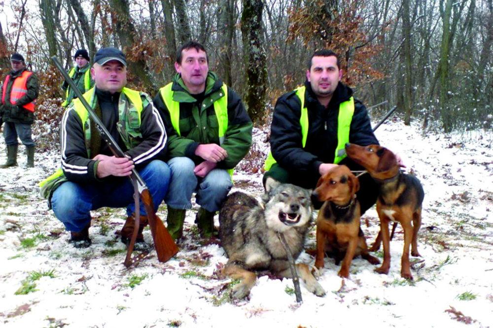 lovačko udruženje, Blace, lov na vukove, odstrel,