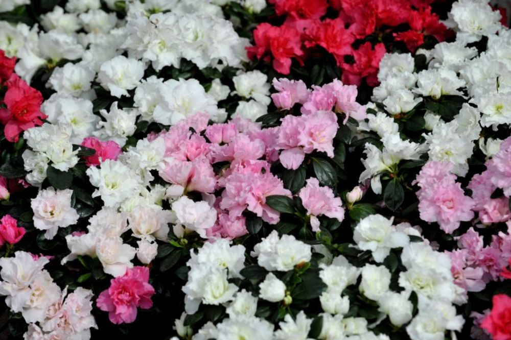RUSKI DOKTOR OTKRIVA: Izlečićete svoju bolest ako zasadite cveće! Evo kako...
