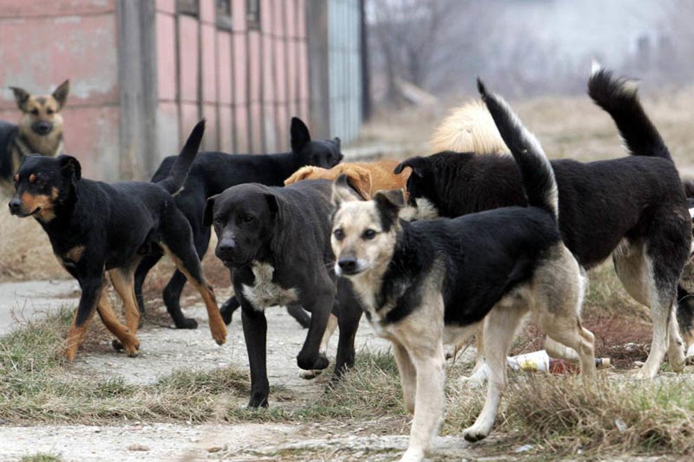 Kruševac, psi lutalice, srne, zečevi, poklani,