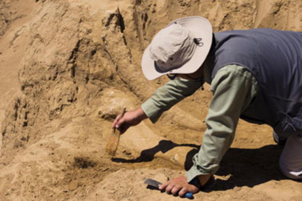 Viminacijum, mamuti, iskopavanje, Miomir Korać,