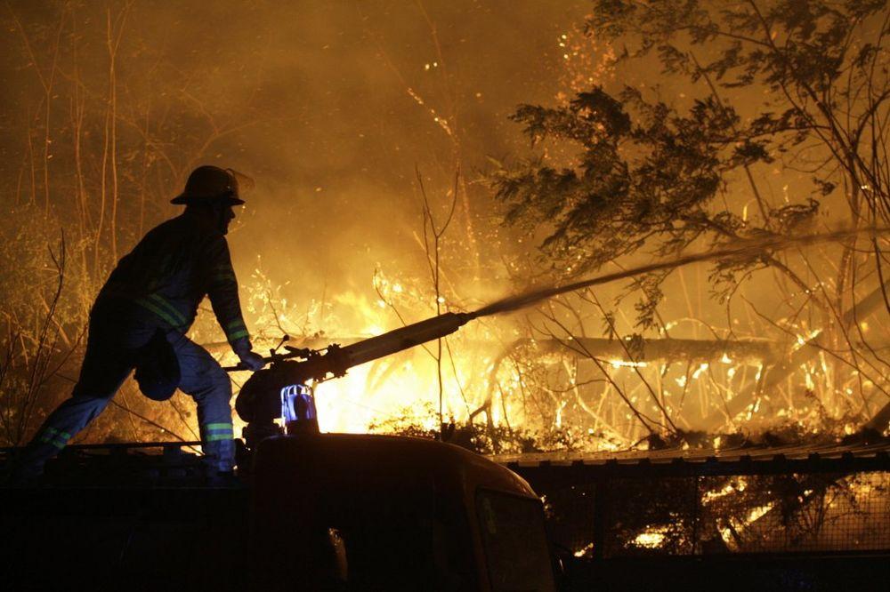 TOR U PLAMENU: U požaru izgorelo 1.600 ovaca!