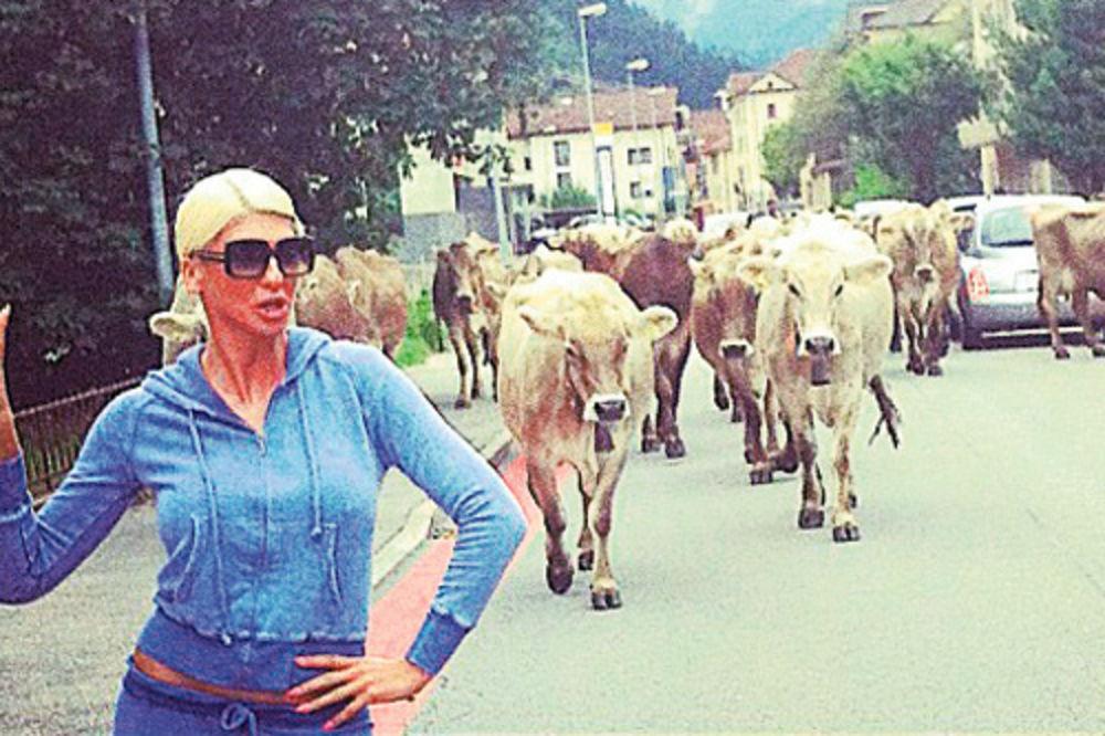 Jelena Karleuša, Milka, krava, Švajcarska, blokada puta, Tviter