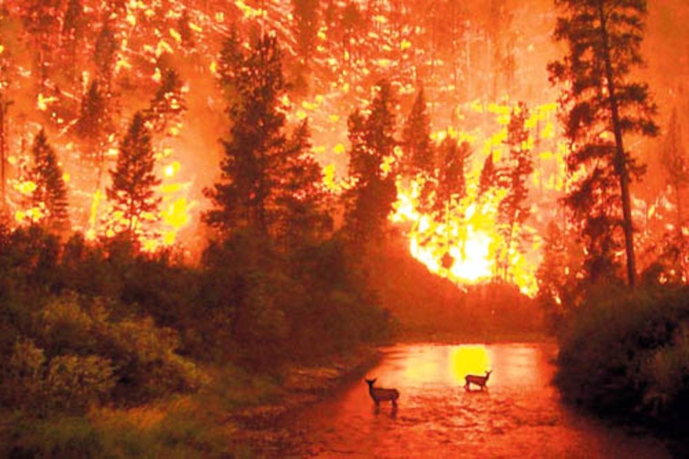 lovci, požari, zaštitari, predator,
