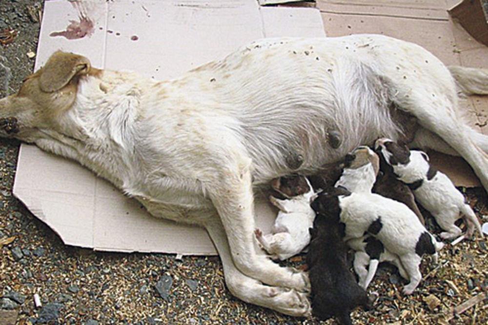 ubijanje pasa, ubijanje životinja, kuršumlija,