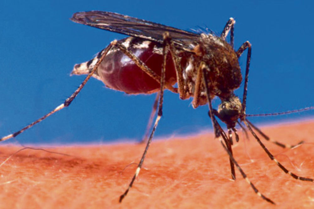 NA DVA FRONTA: Na komarce večeras i sa zemlje i iz vazduha