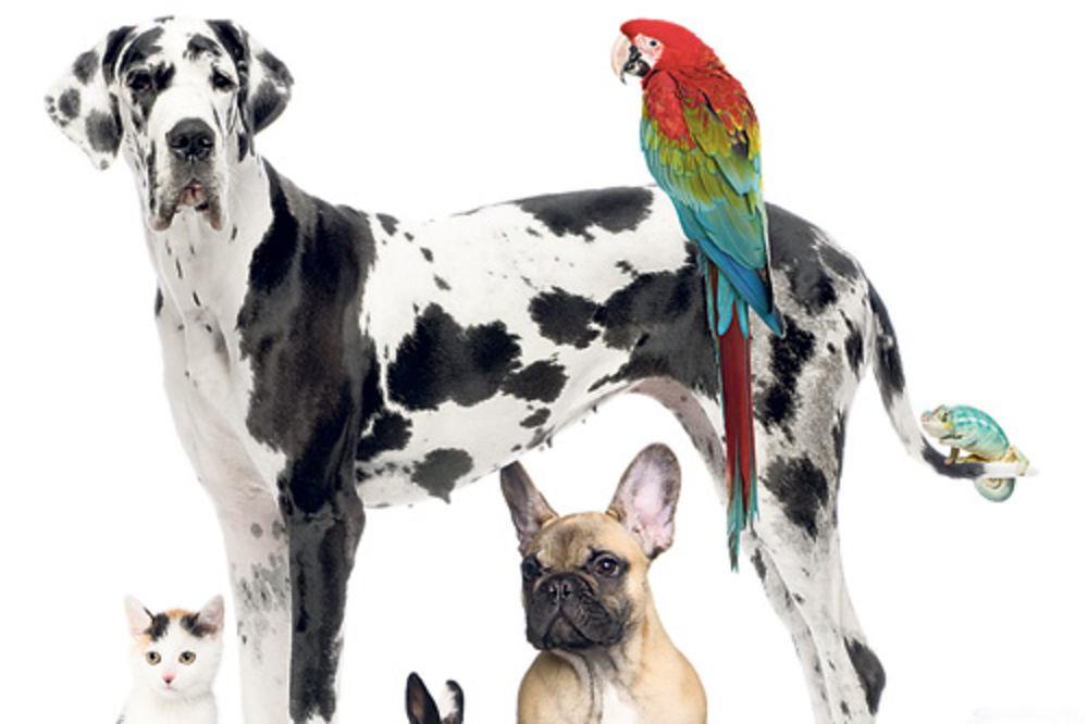 ZNAM DA NIŠTA NE ZNAM: Ovo su 9 najpoznatijih zabluda o životinjama