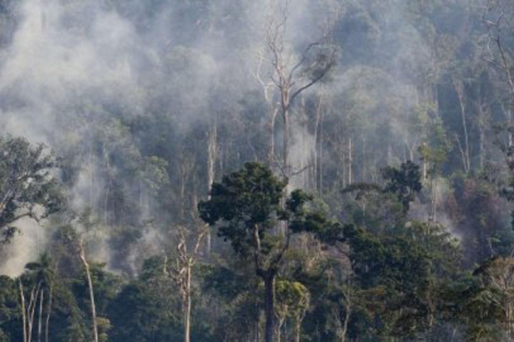 Šuma diše: Amazonija