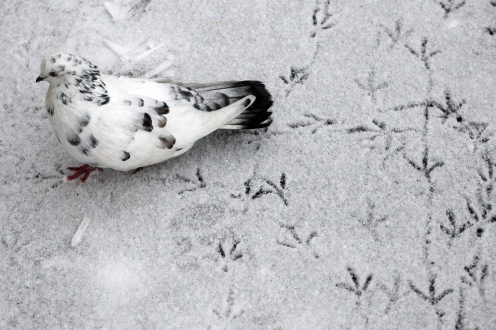 Na Kopaoniku pada prvi sneg!