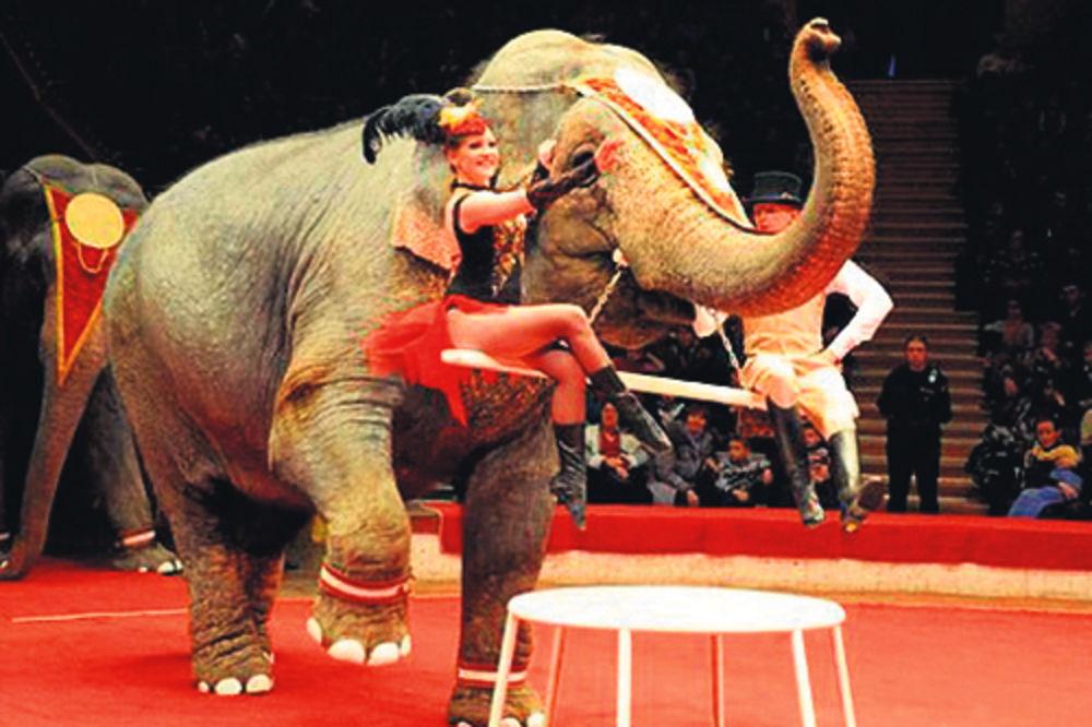 slon, slonovi, Rusija, votka, zima, Sibir, hladnoće,