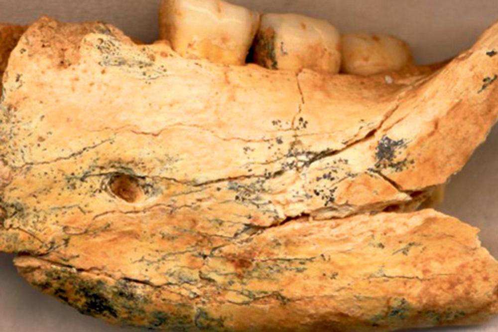 Komadić pronađene vilice u pećini Mala Balanica