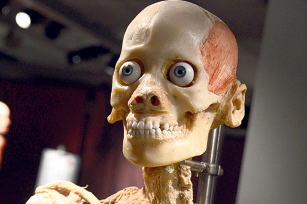 DOGADJANJA - Page 5 Izlozba-ljudsko-telo-razotkrivanje-tela-1361231201-270137