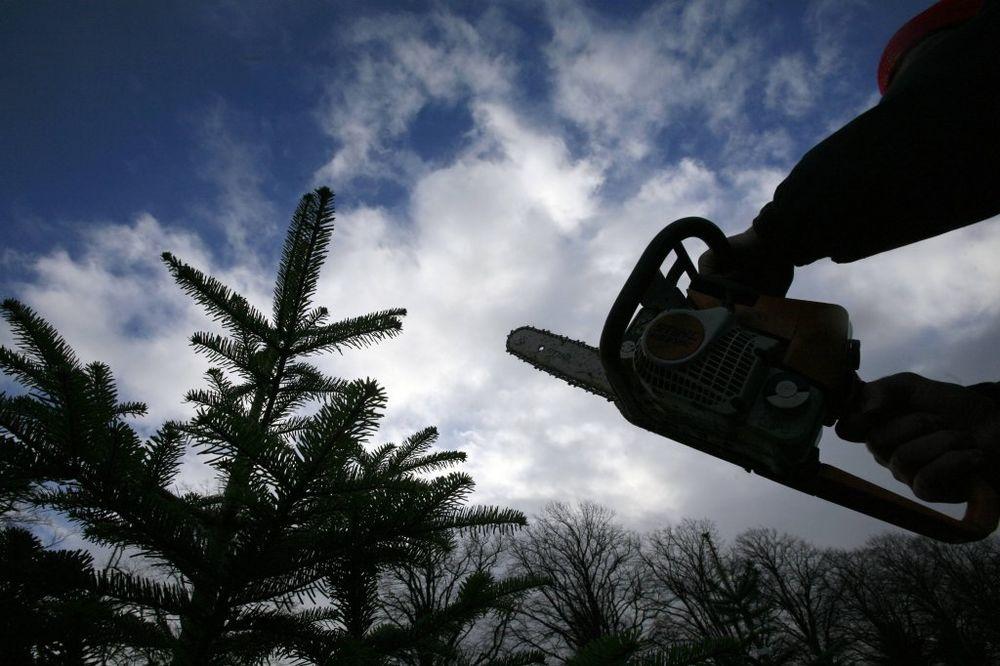 FRAKTURA LOBANJE: Mladić (31) teško povređen dok je testerom sekao drva!
