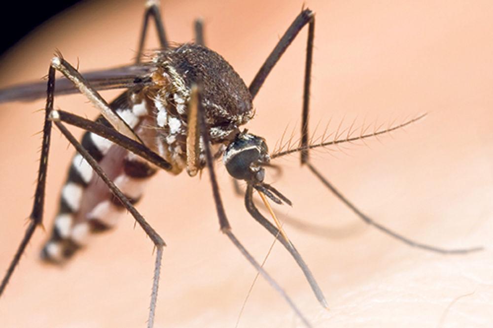 Otarasite se komaraca zauvek Komarci-ruzmarin-zalfija-beli-luk-1368235397-308529