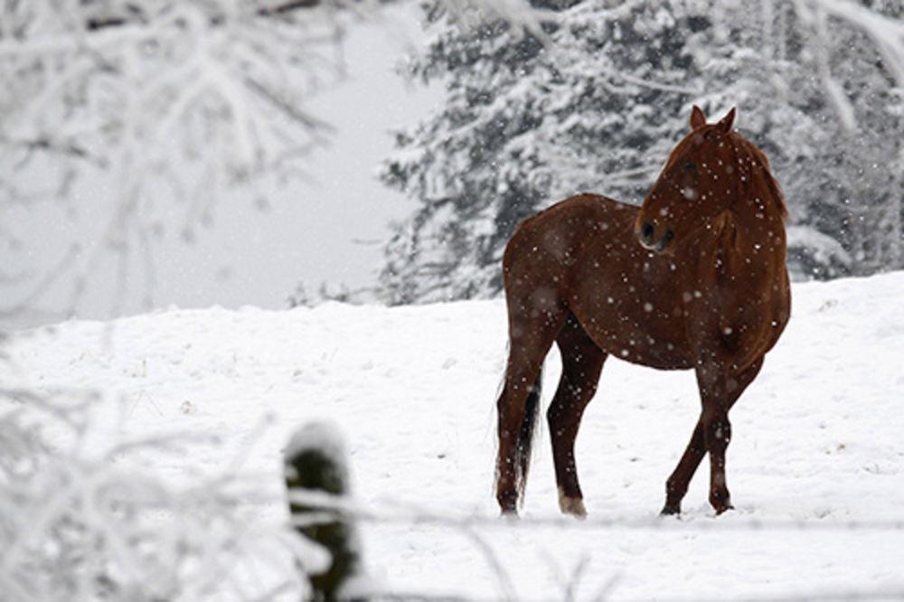 PODVIG LEKARA U KURŠUMLIJI: Pacijenta (81) iz planinskog sela na konju prevezli do Doma zdravlja