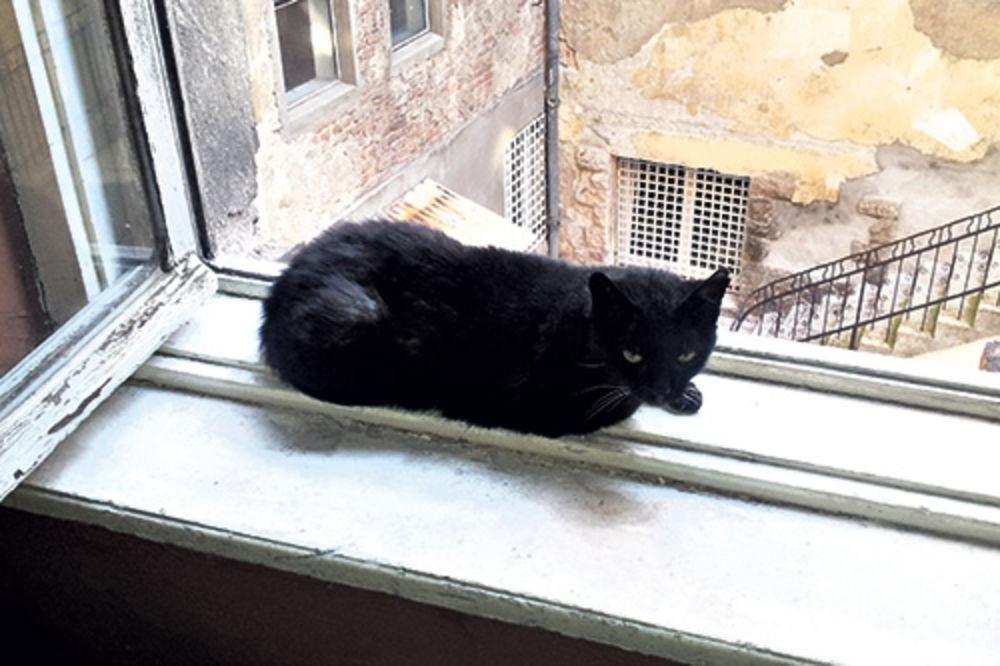 Slika mačka