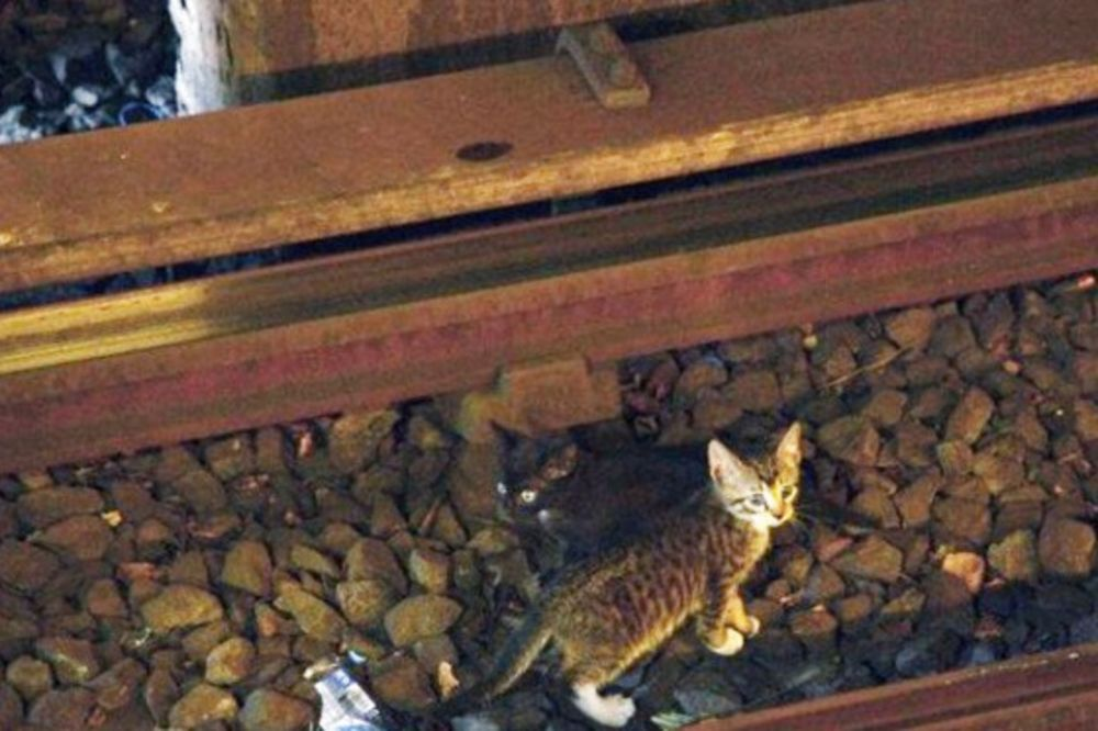 BABA IZ PAKLA: Čekićem pobila mačiće iz kuće da kazni nemirne unuke!