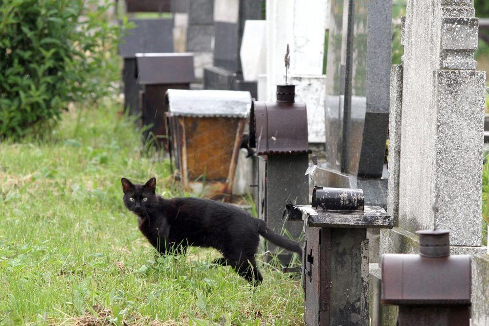 crna mačka, groblje, petak 13, sujeverje, baksuz, foto dragan kadić