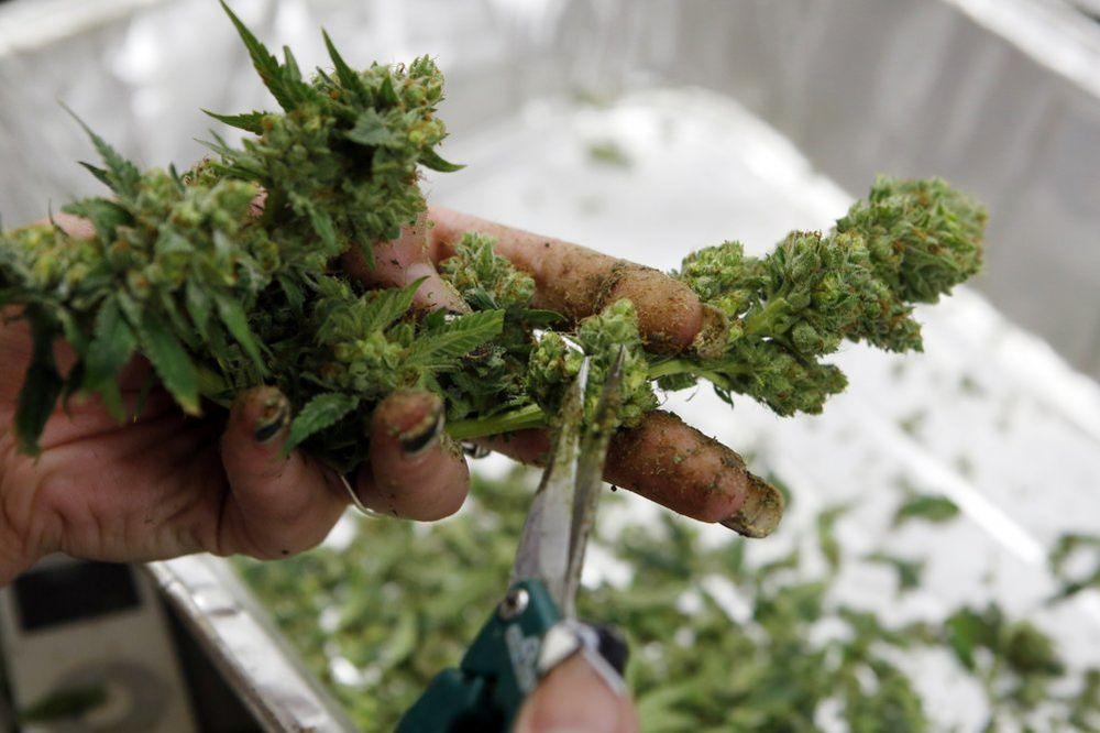 AKCIJA U ALEKSINCU: Policija traga za laboratorijama marihuane