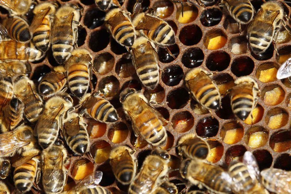 KLIMA SE KLIMA: Pčele se roje kao da leto tek dolazi