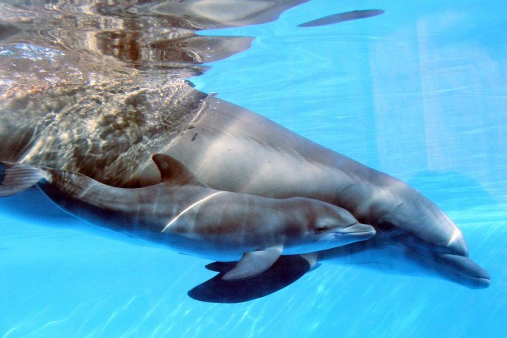 SP Brazil 2014. Delfini-foto-ap-nensi-can-1390246032-431153