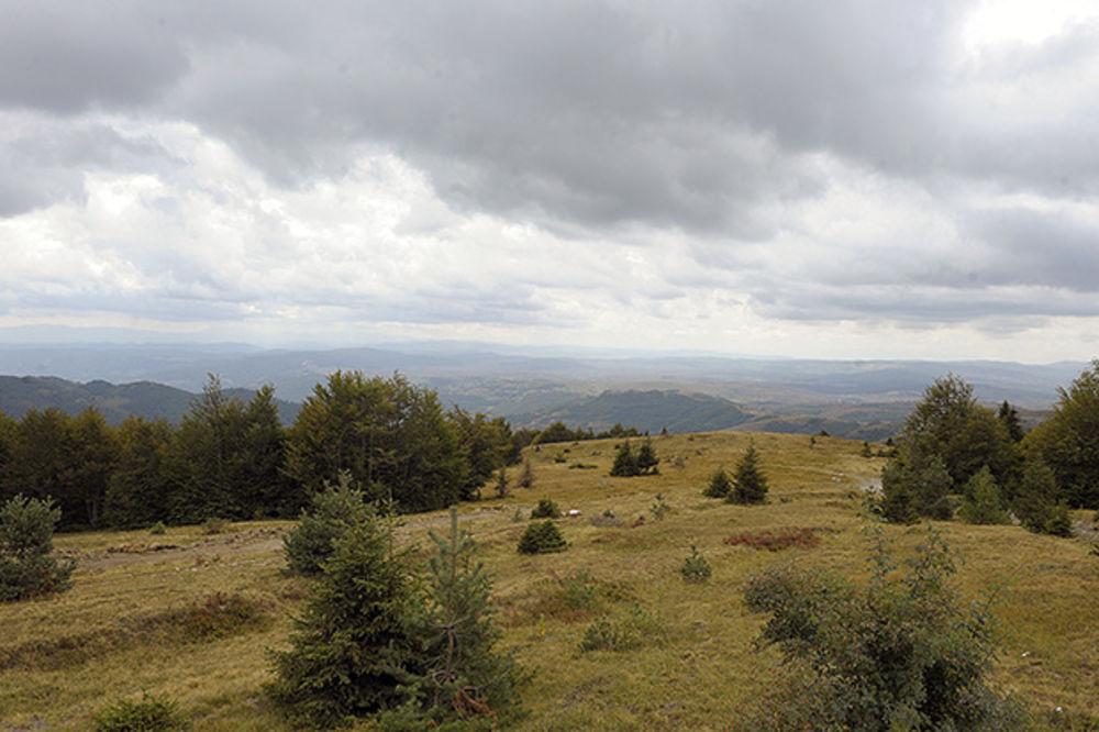 KRVAVA BORBA NA GOLIJI: Vukovi napali stado, bikovi ih jedva odbranili