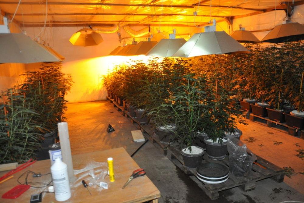 U FABRIČKOJ HALI: Otkrivene laboratorije marihuane u Barajevu