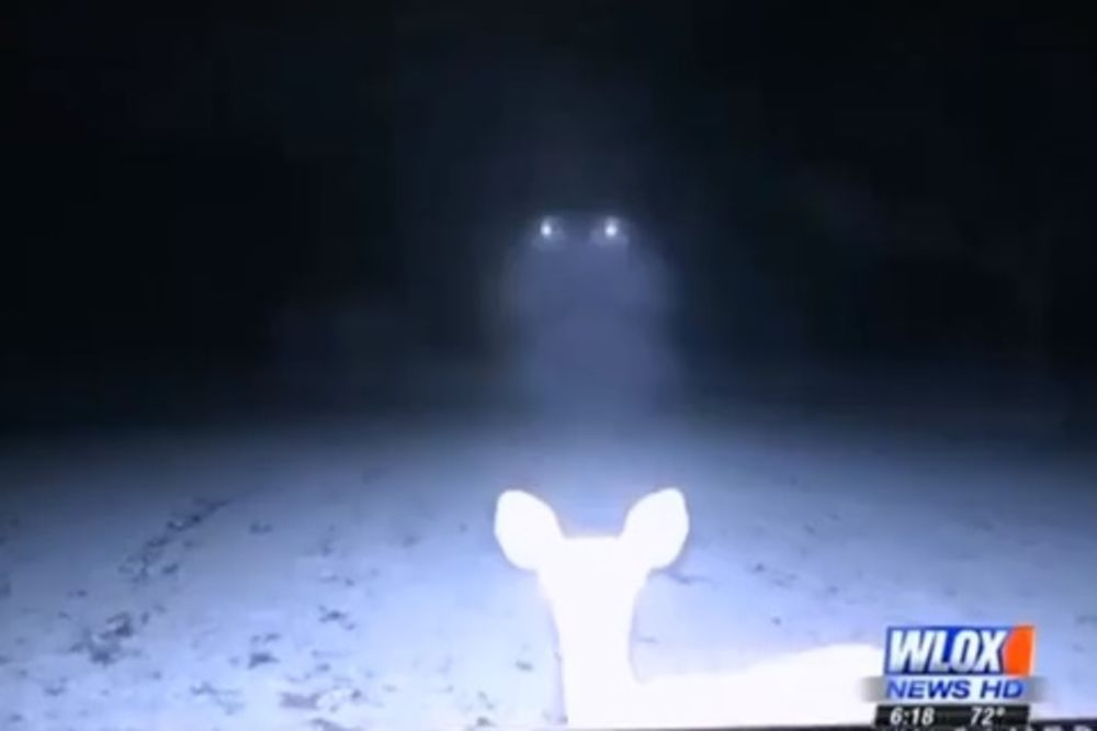 JEZIVO: Postavili kameru da bi snimili jelene, ali ono što su videli ih je prestravilo