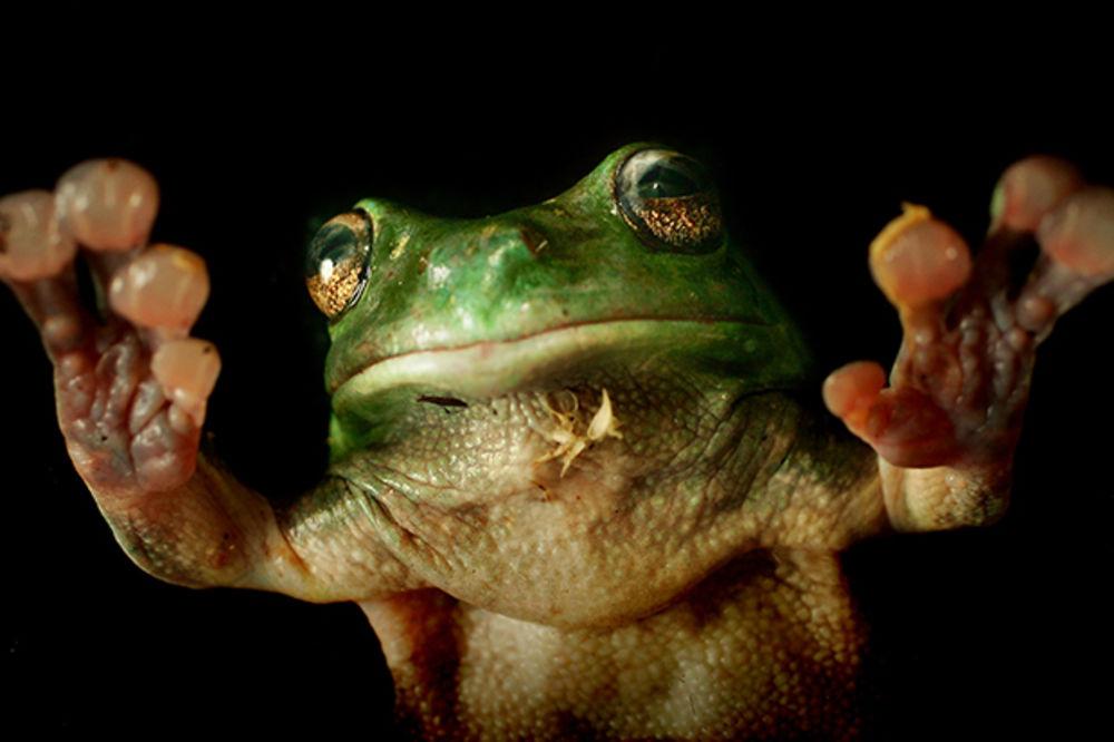 PANK ROKER: Ovo je žaba transformer