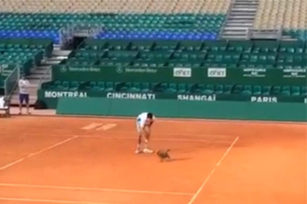 (VIDEO) UŽIVA SA TESLOM: Pogledajte šta je Đoković rekao o svom psu
