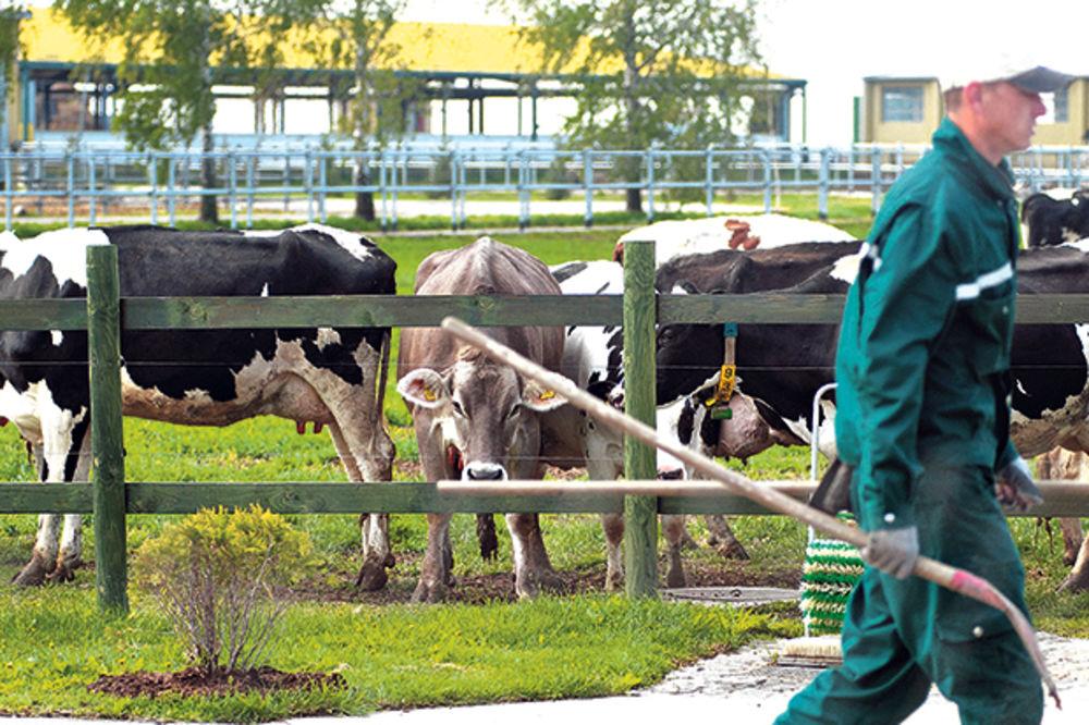 Mališani posetili farmu u Čurugu