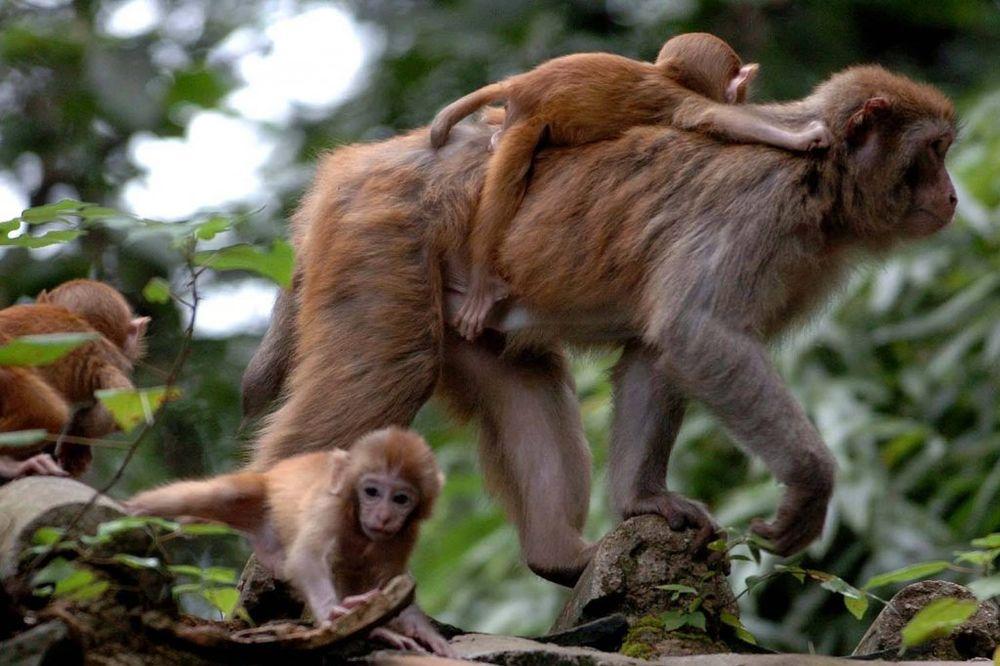 Planet majmuna revolucija online dating