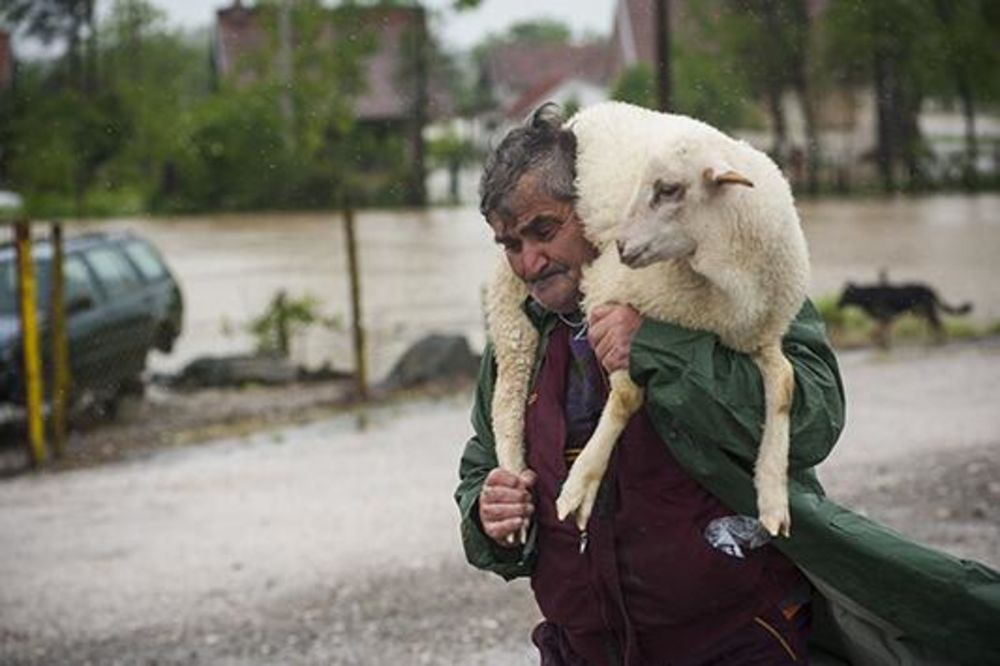HEROJI KOJI SU NAM OSVOJILI SRCE: Rizikovali svoje živote da bi spasli životinje iz bujica!