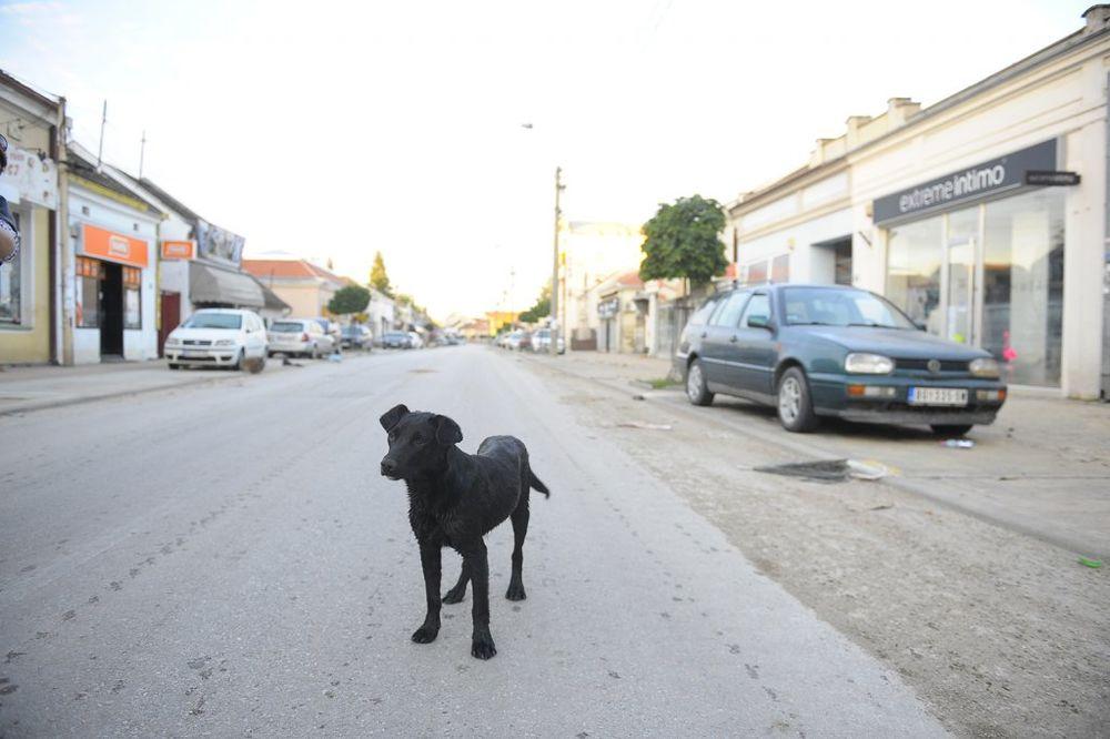 MAJ. 2014 GOD. Obrenovac-foto-dado-djilas-1400541774-500797