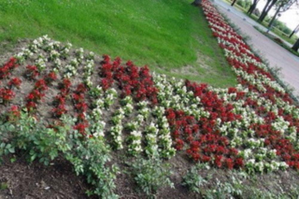 VELIČANJE GENOCIDA U JASENOVCU: Posadili cveće u bojama šahovnice i u obliku slova U!