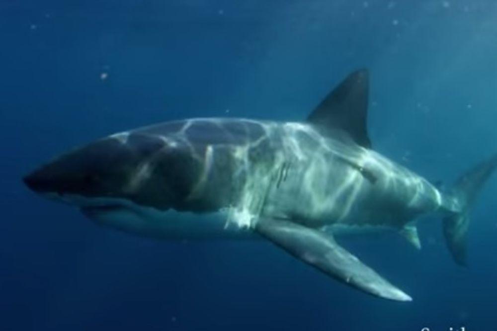 REŠI I SAZNAJ: Koja si morska životinja