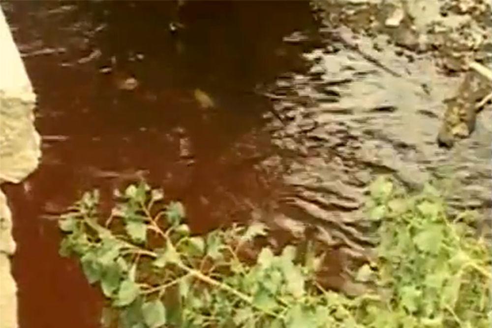BEZ PANIKE: Crvena Morava nije otrovna već dobrodošla