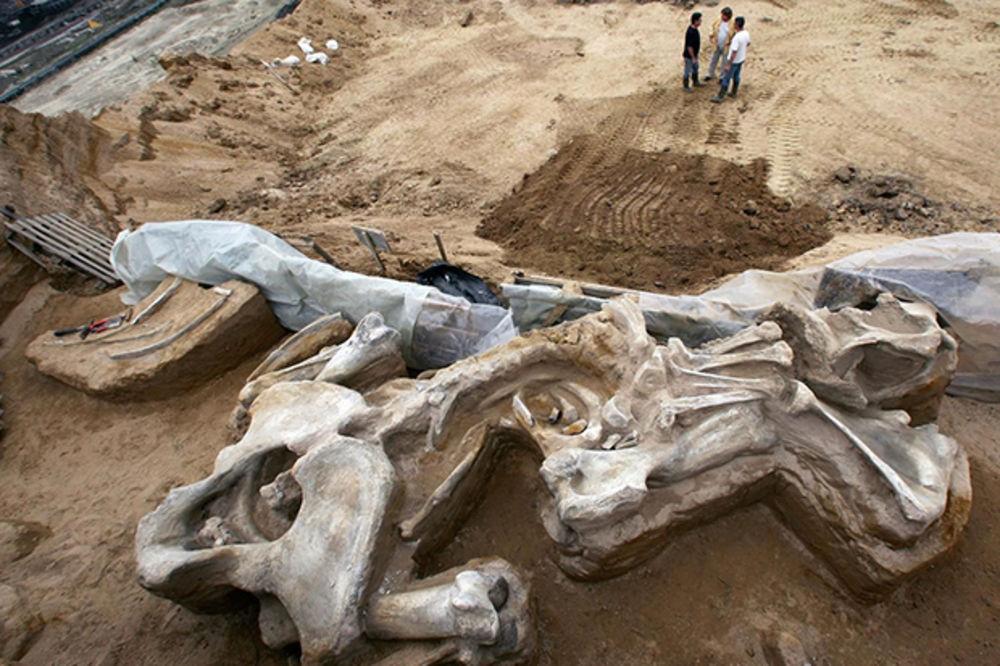 SENZACIJA U BLAČKOM DVORIŠTU: Pronađene kosti mamuta stare više od 10 miliona godina