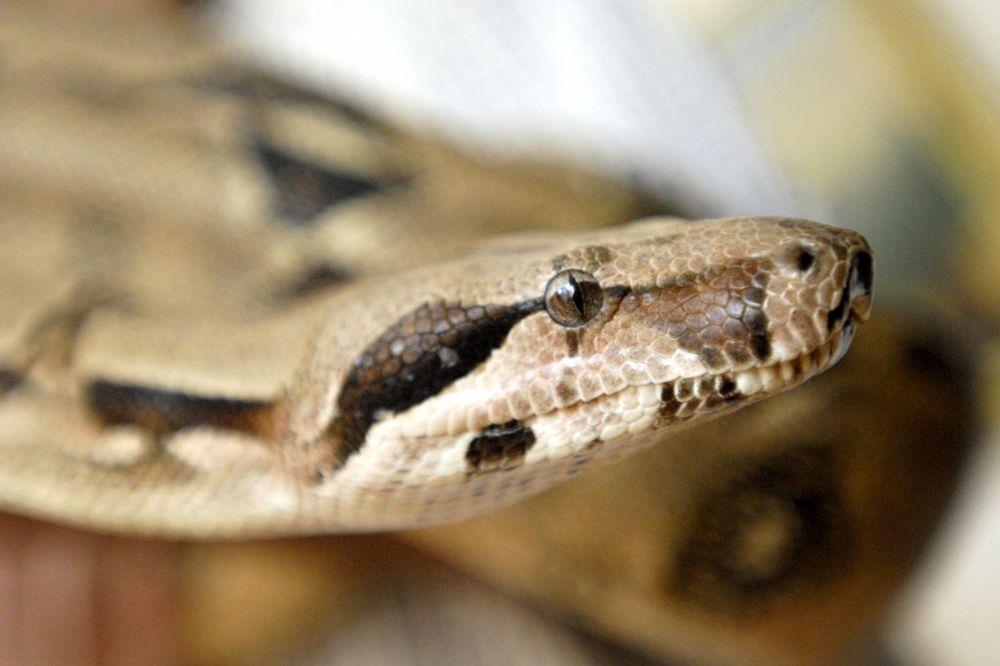 Ako za kuću pazarite zmije i paukove kazne su do 20.000 evra!