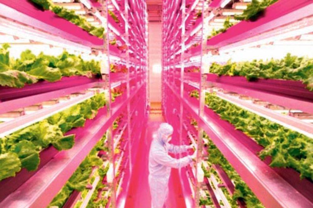 Izuzetan izum: Otvorena fabrika zelene salate!