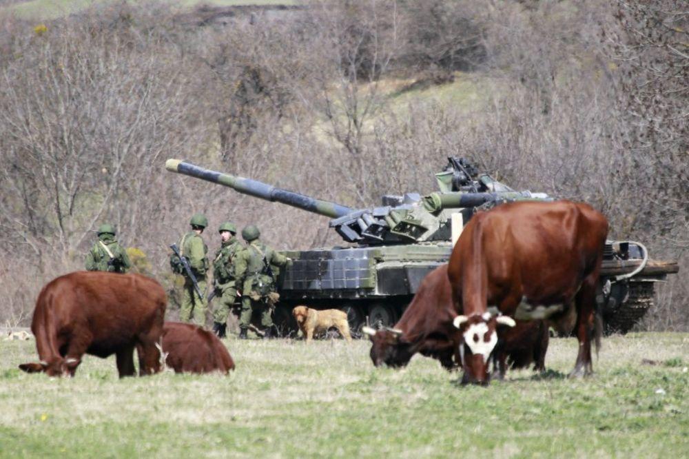 Krave i tenk, Foto Reuters