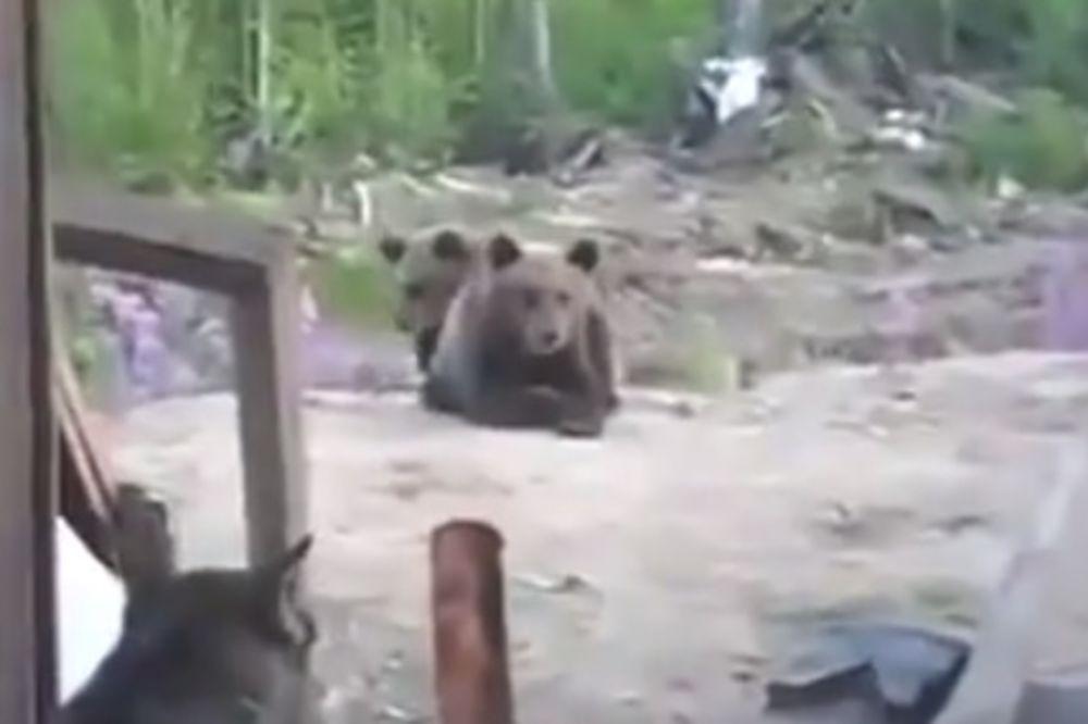 (VIDEO) SNIMIO POSLEDNJI TRENUTAK ŽIVOTA: Igrali se sa mečetom, medved ih sve pobio!