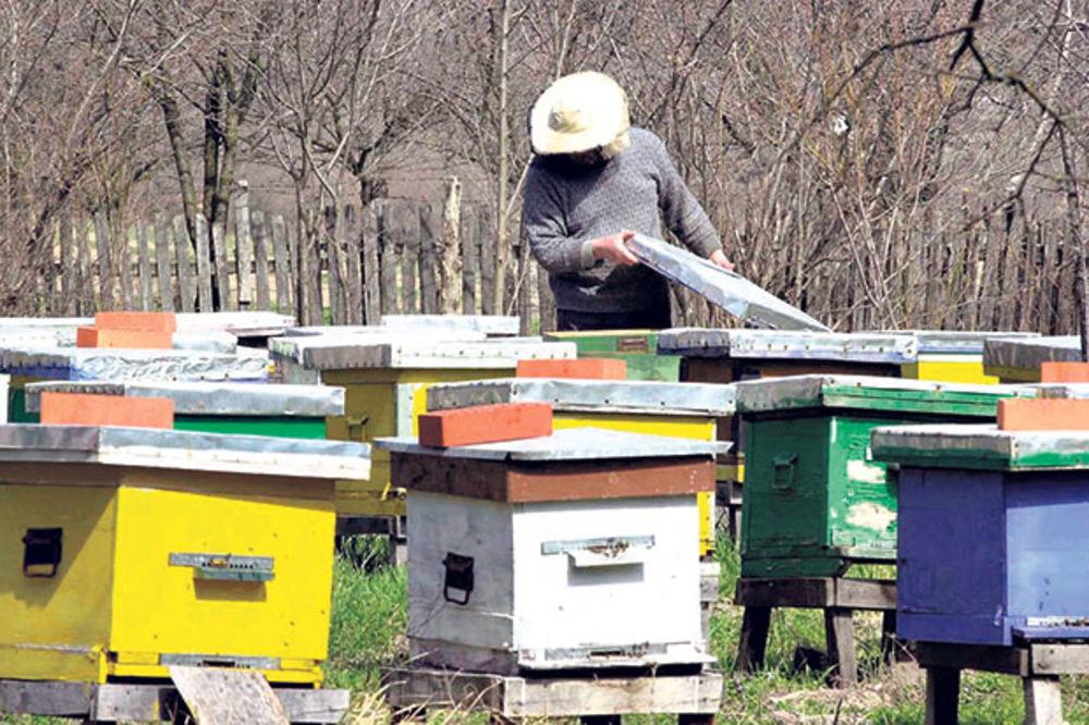 OSTAJEMO BEZ MEDA: Poplave i nemar ugrozile pčelarstvo!