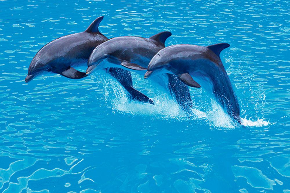 DELFINI ĆE KONAČNO MOĆI DA SE NASPAVAJU: Amerika zabranjuje plivanje sa ovim ljupkim sisarima
