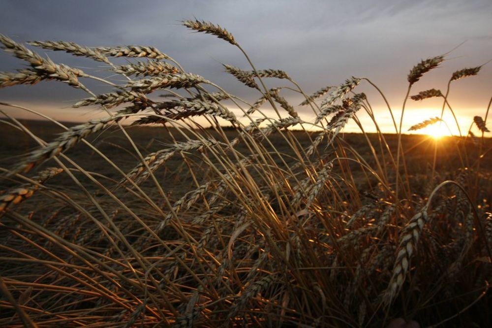 SRBIJA NA UDARU KLIMATSKIH PROMENA: Uzgajaćemo narandže i limun umesto pasulja i pšenice