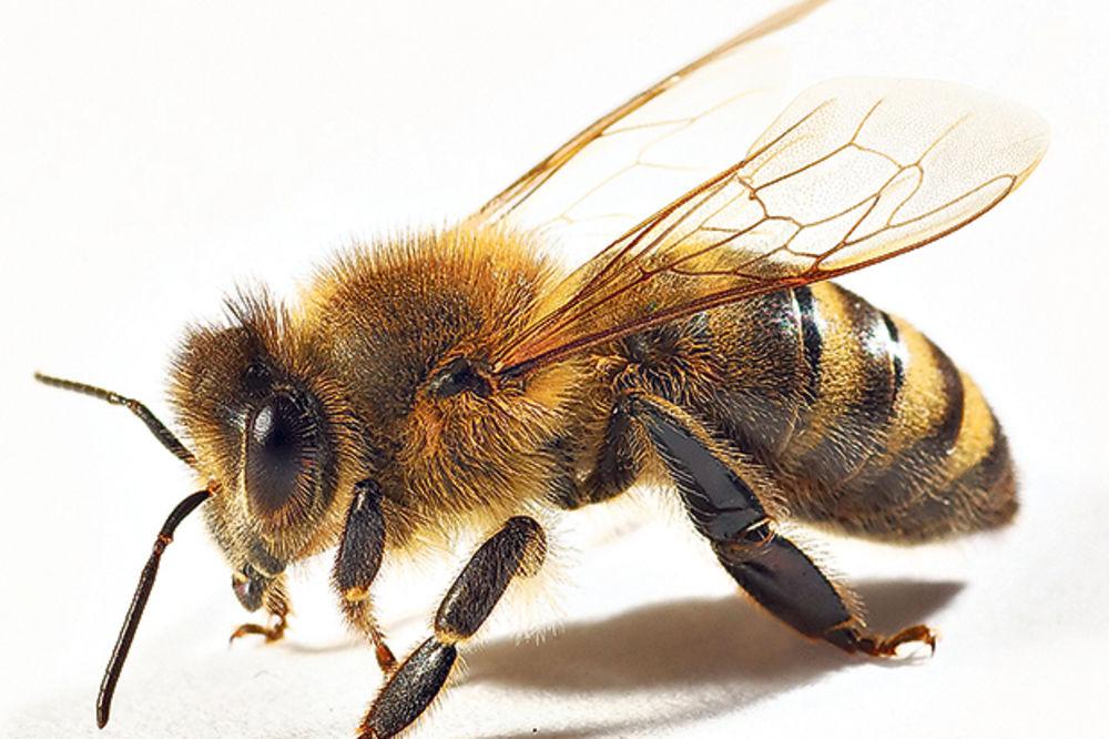 OTKRIĆE KOJE DAJE NADA: Otrov pčela, škorpija i zmija lek protiv raka!