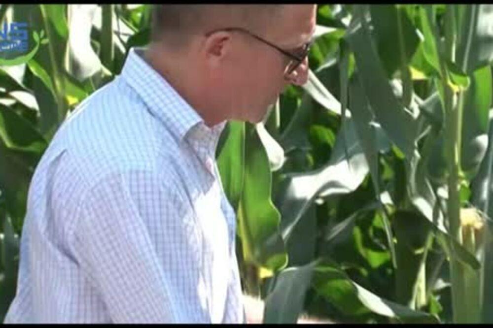 Dr Goran Bekavac o ovogodišnjem rodu kukuruza