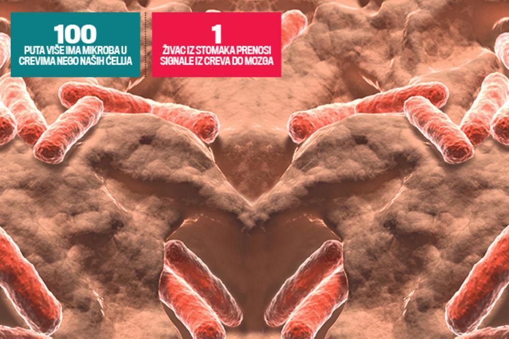 Bakterije iz stomaka kontrolišu naš mozak
